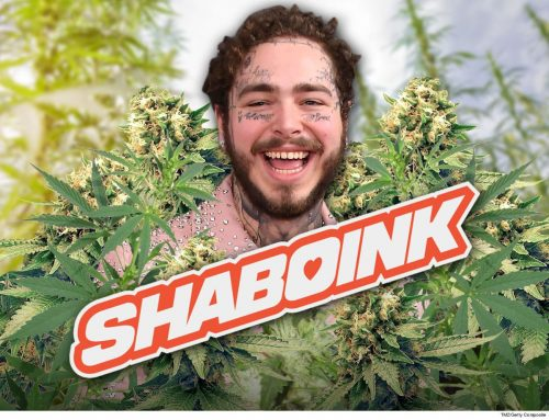 Post Malone Launching Weed Company Shaboink